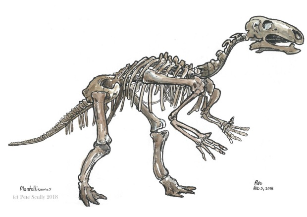 NHM mantellisaurus 2018 sm