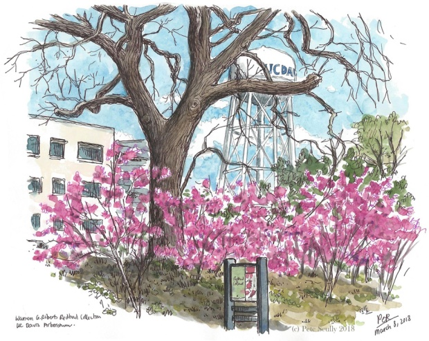 Redbuds Arboretum Mar 2018 sm